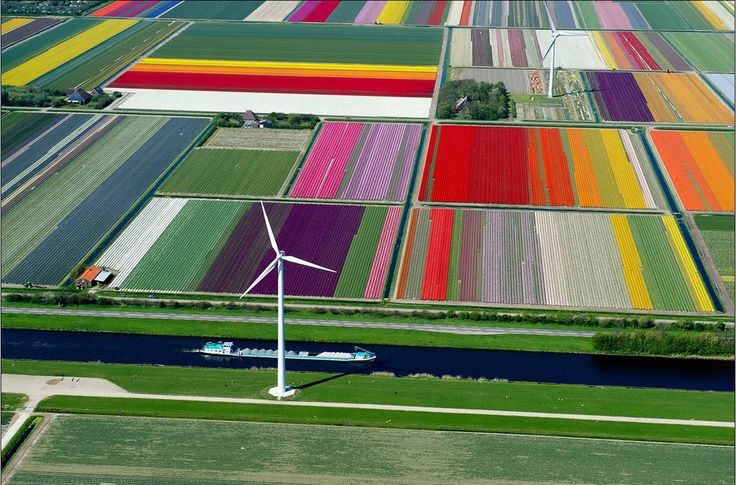 hollandia 2